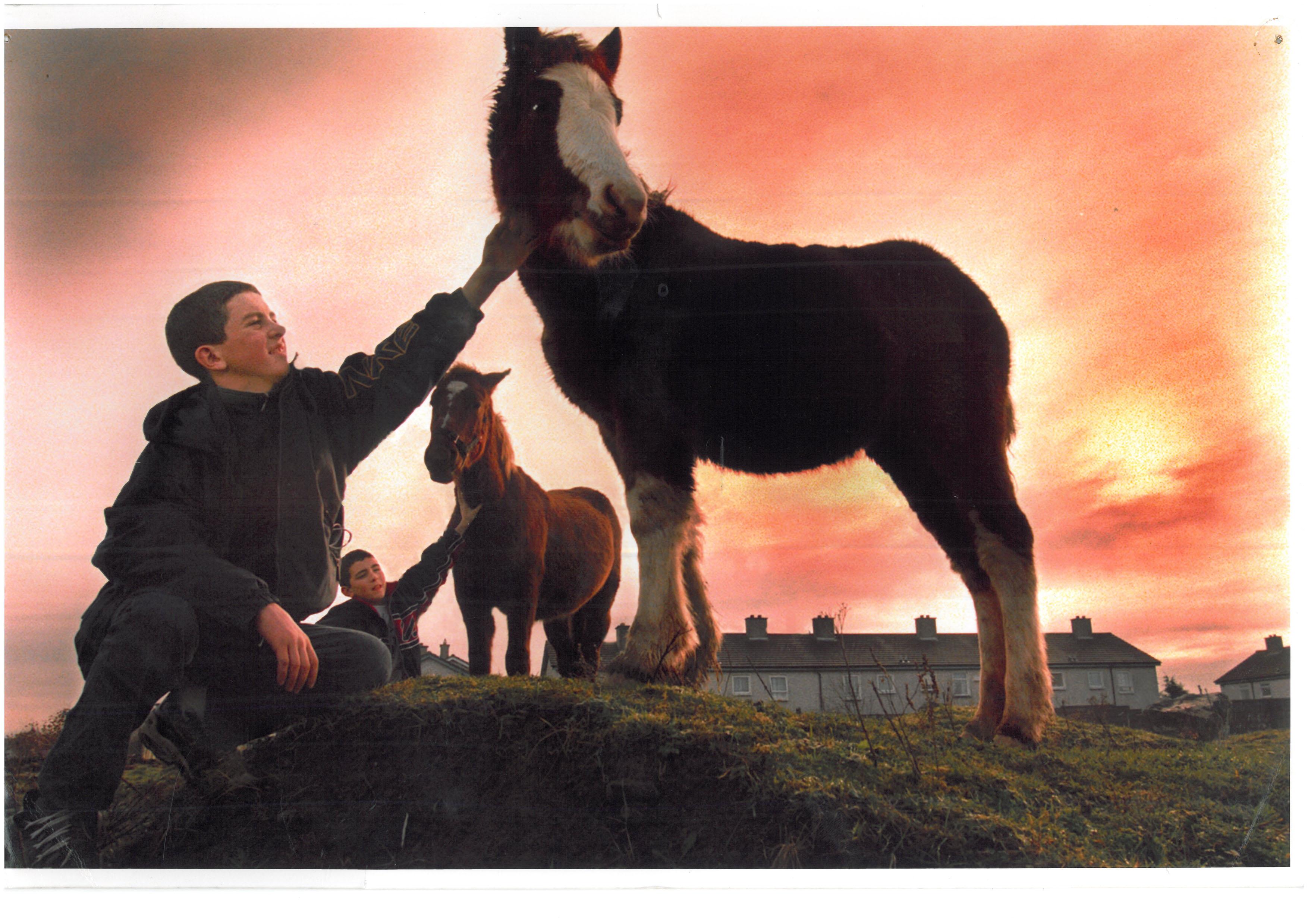 Horse&BoysPhoto