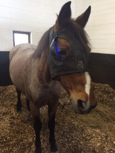 Equilume Light Mask